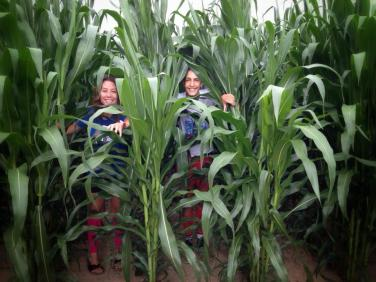 Getting lost in the corn fields!